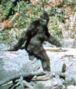 Actual bigfoot image taken from the Patterson film